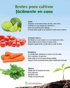 Garden Deco, Garden Art, Vegetable Garden, Garden Plants, House Plants Decor, Plant Decor, Happy Flowers, Healthy Meal Prep, Farm Life