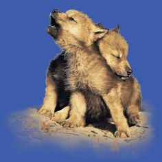 #wolf #cubs #kids #children #tshirts #tee #clothing
