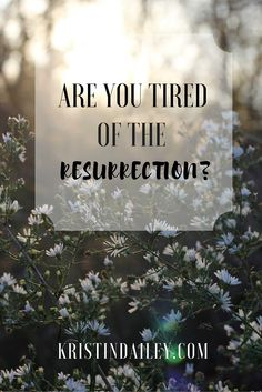 To the wearied Christian, will you hear of resurrection anew? Will you not glory that you've been lifted from your well-deserved grave and brought to new life? | KristinDailey.com