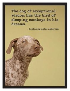 The dog of exceptional wisdom has the bird of sleeping monkeys in his dreams - Confusing Aztec Aphorism - Wise Dog 3259