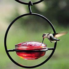 Couronne Co. Sphere Hummingbird Feeder COURM045301 couronne http://www.amazon.com/dp/B00GY5UML2/ref=cm_sw_r_pi_dp_RjWVwb0MM8VFG