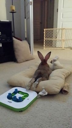 Just a bunny Chillin with his bunny 🐰 Bunny Paws, Cute Baby Bunnies, Funny Bunnies, Rabbit Life, House Rabbit, Pet Rabbit, Animals And Pets, Baby Animals, Funny Animals