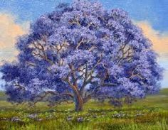 Jacaranda.I want this planted at my house.