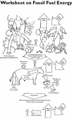 Dinosaurs and Fossils: Infer with Fossils, Primary Science ...