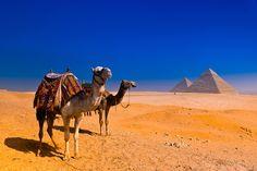 Passeio de camelo no Egito