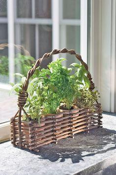 Plant a Windowsill Herb Garden