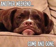 another weekend gone quotes quote monday sunday sunday quotes monday humor tomorrows monday