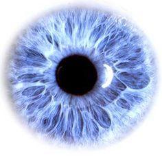 eye - Google Search