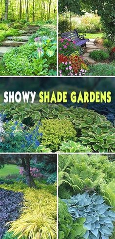 I have come to absolutely LOVE a shade garden. Shade gardens offers you a feeling of serenity. Maybe that makes us look a little closer for the details. It's not all about the big picture. Ah, wisdom…MoreMore  #gardeningideas