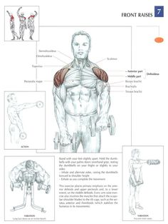 Muscle Building Tips. Gain More Mass With These Weight Training Tips! It can be fun to lift weights if you do it safely and correctly. You can enjoy yourself and see the progress of an effective workout routine. Sport Fitness, Mens Fitness, Fitness Tips, Health Fitness, Gym Workouts, At Home Workouts, Fitness Exercises, Front Raises, Muscle Anatomy