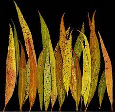 Weeping Willow Leaves - Barbara Sammons
