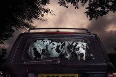 Martin Usborne – The Silence of Dogs in Cars | One360.eu