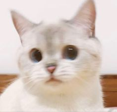 Funny Cute Cats, Cute Baby Cats, Cute Little Animals, Kittens Cutest, Cats And Kittens, Funny Animals, Ragdoll Kittens, Tabby Cats, Funny Kittens