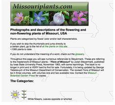 Plant ID websites | Identify that Plant