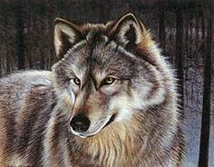Wolf by Louis Frisino    I own a print of this as well... Love it