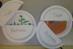 Tops and bottoms activity.plus farm and many more preschool activities Activities For 2 Year Olds, Pre K Activities, Preschool Activities, Preschool Lessons, Plant Lessons, Science Lessons, Science Fun, Science Education, Kindergarten Science