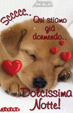 Good Night, Good Morning, Teddy Bear, Toys, Animals, Fantasy, Card Stock, Good Morning Images, Home