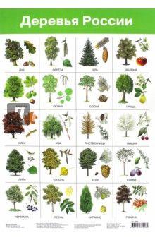 деревья в россии названия и фото