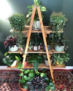 [New] The 10 Best Home Decor Ideas Today (with Pictures) - Peperomia family shelfie Photo: __ Room With Plants, House Plants Decor, Plant Decor, Indoor Garden, Garden Plants, Indoor Plants, Porch Plants, Vegetable Garden, Decoration Plante