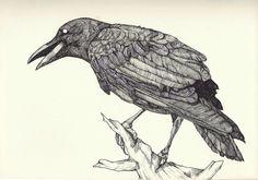 crow by kyri-IS-dark on deviantART