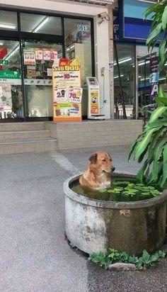 Just chilling, dog - Imgur