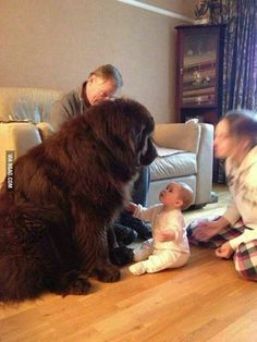 My hear absolutely melts at this photo. A dog so big, one snap would cause death - and yet you can clearly see that the posture of the dog is non-threatening and calm and the look of absolute trust on the baby's face is beautiful. . This is why I love dogs SOOOOO much!