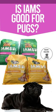 Iams dog food offers health food for all stages of life, which include puppys, seniors, and adults. Small Dog Breeds, Small Breed, Foods Dogs Can Eat, Pug Accessories, Types Of Dog Food, Dog Storage, Dog Food Brands, Homemade Dog Food, Dog Food Recipes