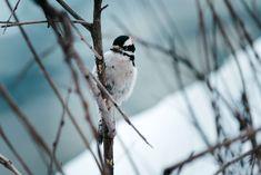 #bird #branch #small #songbird #spring #twig