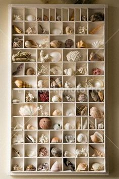 Shell Collection Box~~~What a great way to showcase your finds! Maybe with a tag in each slot with the finder and year?
