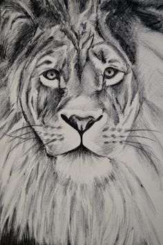 LION ink illustration ( not a print) Cute Drawings, Animal Drawings, Pencil Drawings, Lion Sketch, Rottweiler Puppies, Ink Illustrations, Art Blog, Sketches, Artwork