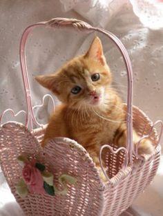 """Cats are love on 4 legs."" --Richard Torregrossa"