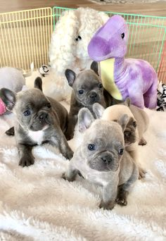 Train Your Dog The Smart Way With These Handy Tips. French Bulldog Puppies, Baby Puppies, Cute Puppies, Cute Dogs, Dogs And Puppies, French Bulldogs, Doggies, Animals And Pets, Baby Animals