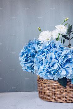 blue hydrangea by OlgaPilnik on @creativemarket