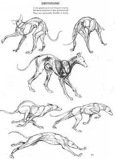 Greyhound structure in action