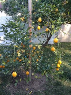 7 Easy Container Fruits If you're thinking about creating a container garden, be sure to check out these seven easy container fruits. Eliz...