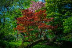 Three colors by Ryusuke Komori on 500px