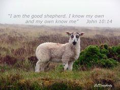 Baby Lamb Exmoor Par