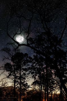Ponderation — va103:   Dark ForestiStockPhoto | RedBubble |...