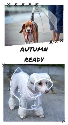 Never get your dog wet again. Choose between the raincoat or the dogbrella now! Silly Dogs, Cute Dogs And Puppies, Funny Dogs, Cutest Dogs, Adorable Dogs, Cute Dog Pictures, Dog Photos, Coaching, Dog Branding