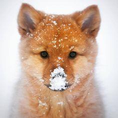 "(@earthpix) on Instagram: ""Why do dogs love snow? ❄️Photo by @samimatias"""