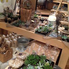 Indoor succulent planting supplies at West Elm (in store)!