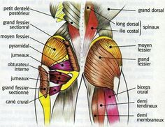 ... ) on Pinterest | Yoga anatomy, Lower back exercises and Sciatica