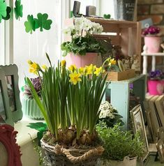 We will be closed on Saturday, March 17 for St Patrick's Day parade and festivities in the village...open again Tuesday 20 March!  #longweekend #paddysday #flowershop #florist #shoplocal #shopirish #bloomsdayflowers