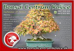 Bonsai Centrum Košice