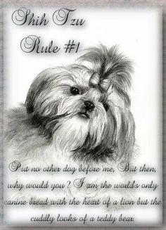 Shih Tzu Rule #1