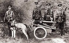 Dogs were used to pull equipment in World War 1. THANK YOU TO ALL DOGS WHO SERVED IN WORLD WAR 1. ♥♥