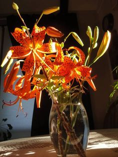 Tiger Lilies - WetCanvas | Reference Image Library