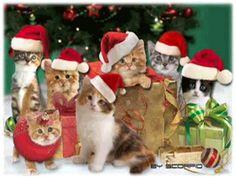 Christmas Spirit :: '' GARDEN OF FRIENDSHIP '' :: Care2 Groups