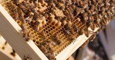 Das Bienenprodukt Propolis wird seit Jahrtausenden in verschiedenen Kulturen eingesetzt. So kannst auch du es für deine Gesundheit nutzen.: