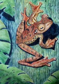 Freckles Tree Frog Painting by Joey Nash - Freckles Tree Frog Fine Art Prints and Posters for Sale